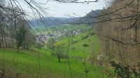 Frühlingswald nach Rothenfluh ...